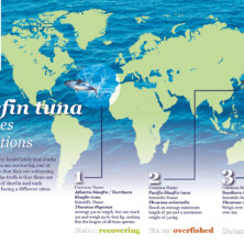 Infography – WWF